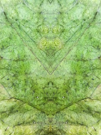 unsanitary: grunge leaves texture background
