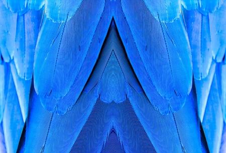guacamaya: La textura de plumas de guacamayo Foto de archivo
