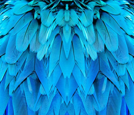 blue feather Macaw bird texture background Stock Photo