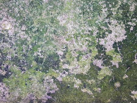 moist: moist wet concrete texture background