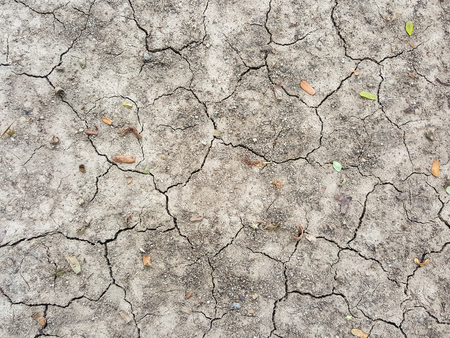 field stripped: crack dry soil texture background Stock Photo