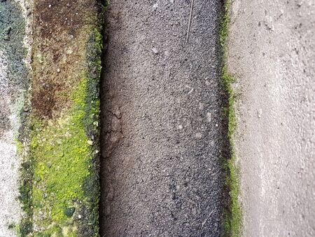 field stripped: moist green lichen on the concrete texture