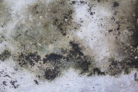grubby: grunge moist dirty stain concrete wall texture background Stock Photo