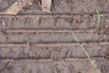 field stripped: trace tire car on the wet soil texture