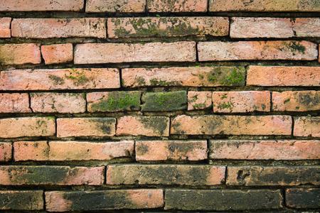 lichen: Moist lichen brick wall texture Stock Photo