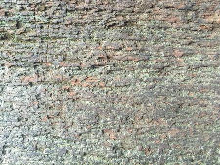 lichen: green moist lichen on wood texture