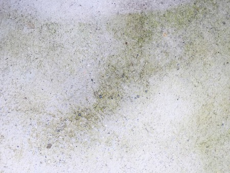 lichen: Moist lichen concrete floor texture