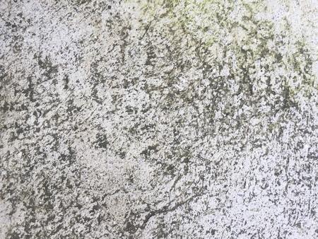 moist: Moist lichen concrete floor texture