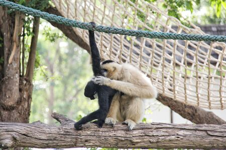 monkey are playing on the branch