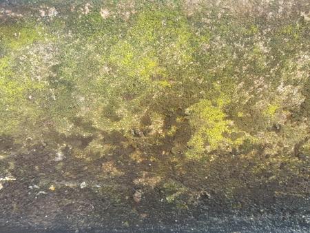 grunge wet moist lichen texture