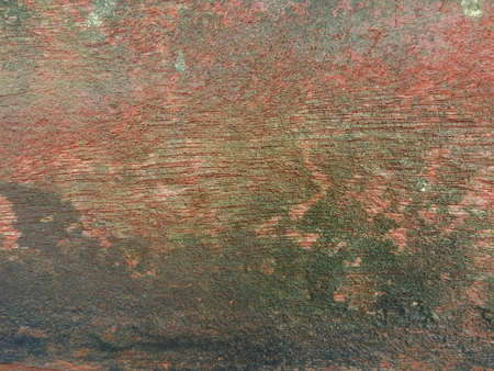 green lichen on grunge red wood wall texture