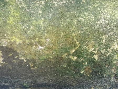 rough green moist lichen concrete texture Stock Photo - 75245593