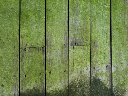 lichen on moist wet vertical wood floor texture