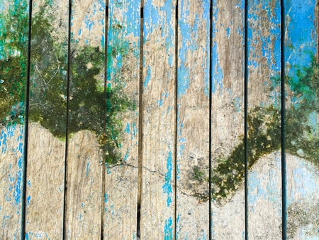 lichen on old moist wood texture
