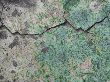 crack grunge concrete wall cover with green lichen
