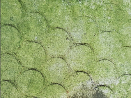 green lichen on moist concrete wall texture