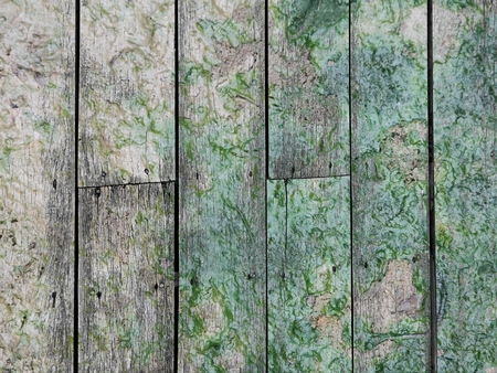 wet lichen on old vertical wood texture