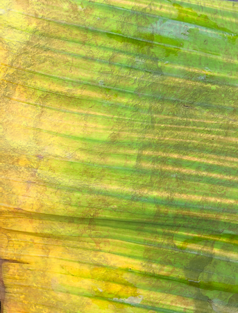 grunge stain on banana leaves texture