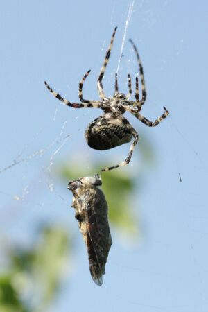 gadfly: Spider and gadfly