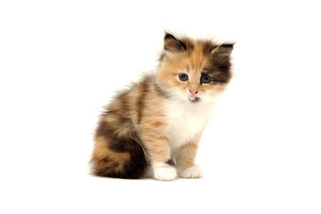 Cute kitten isolated on white background (one month form birth)