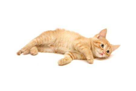 ginger hair: Cute ginger kitten lying on the floor  isolated on white background Stock Photo