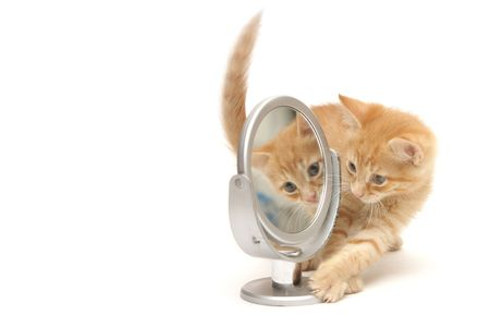 Ginger kitten looking into the mirror isolated on white background Stock Photo