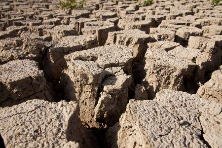 Dry earth texture Stock Photo - 8018898