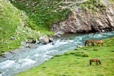 motton: Three grazing horses near the river and rocks