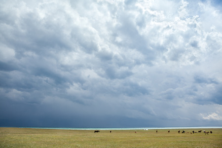 Group of horses pasturing under stormy clouds near lake photo