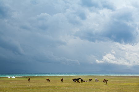 Herd of horses under stormy sky at the lake photo