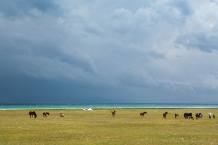 Horses under rain clouds at the lake Song Kul, Tien Shan, Kyrgyzstan photo