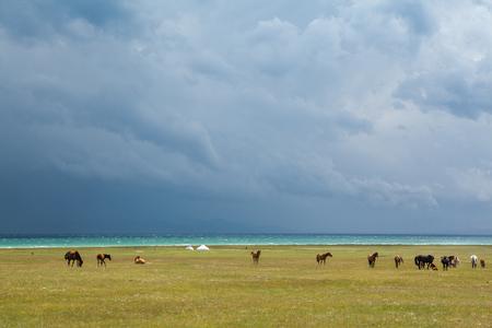 motton: Horses under rain clouds at the lake Song Kul, Tien Shan, Kyrgyzstan