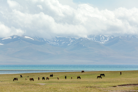 tien shan: Grazing horses at the lake Song Kul, Tien Shan, Kyrgyzstan