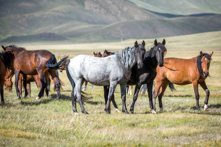 pasturage: Group of horses on pasturage looking at camera Stock Photo