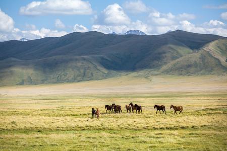 Grupo de cavalos indo embora a c