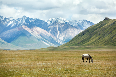 Horse feeding grass in mountains of Tien Shan, Kyrgyzstan photo