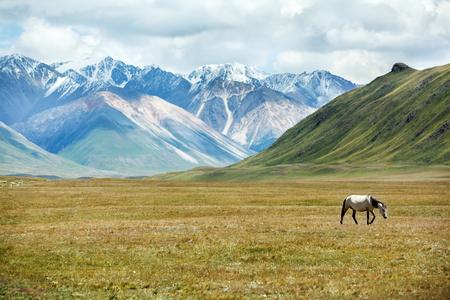 tien shan: Horse walking in mountains, Tien Shan, Kyrgyzstan Stock Photo