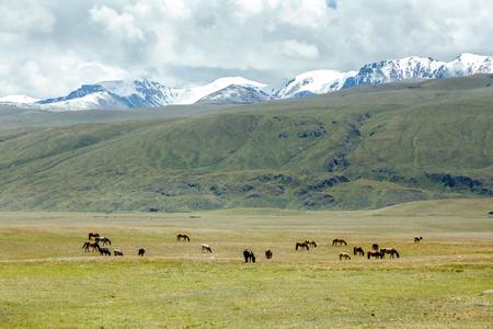 tien shan: Horses grazing near stream in mountains, Tien Shan, Kyrgyzstan Stock Photo