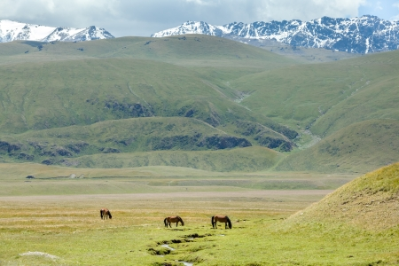 tien shan: Three horses grazing near stream in mountains, Tien Shan, Kyrgyzstan