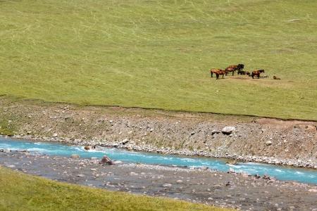 motton: Horses resting near motton blue river