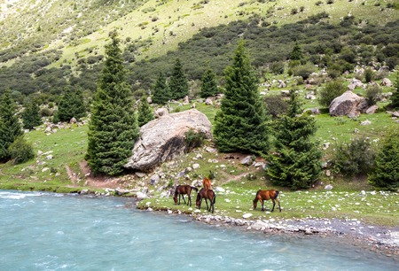 motton blue: Group of four horses grazing at blue mountain river