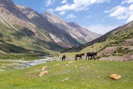 tien shan: Three grazing brown horses, Tien Shan mountains, Kyrgyzstan Stock Photo