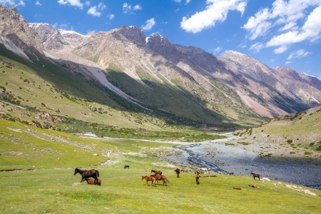tien shan: Mountain landscape with group of pasturing horses