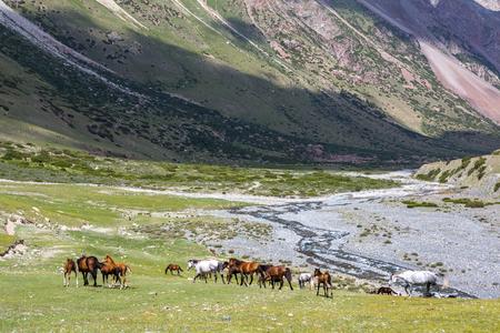 tien shan: Herd of horses pasturing near mountain river, Tien Shan
