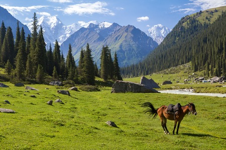 Mountain landscape with horse, Tien Shan, Kyrgyzstan photo