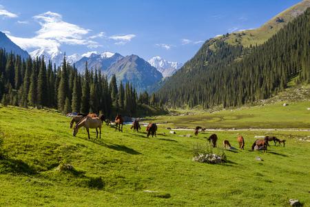 rancho: Paisaje de montaña con la manada de caballos pastando Foto de archivo