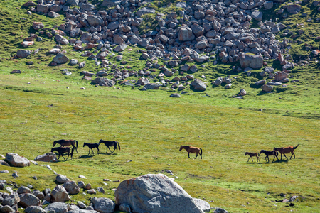 tien shan: Mountain landscape with walking horses, Tien Shan Stock Photo