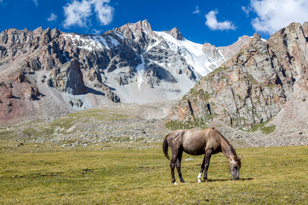 roan: Horse in mountains feeding grass at sunny day, Tien Shan