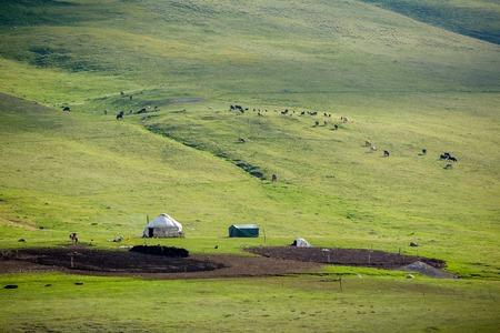 tien shan: Yurt and livestock in Kyrgyzstan, Tien Shan mountains