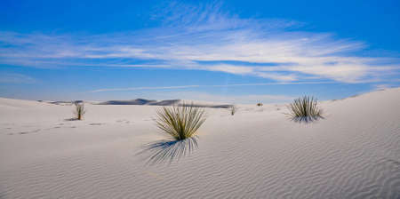 White sands national monument is one of the most beautifull parks in the USA  White sand dunes with untouched dunes green plants that surprise you since there is no watter around  The blue sky around it makes it additionally dramatical photo